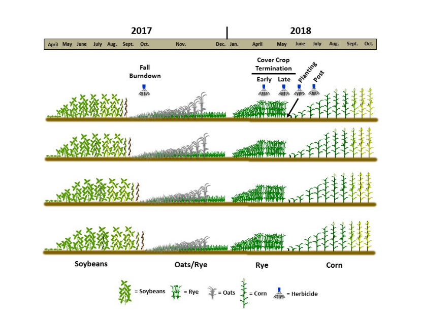 Figure illustrating various planting and termination dates in cover crop study