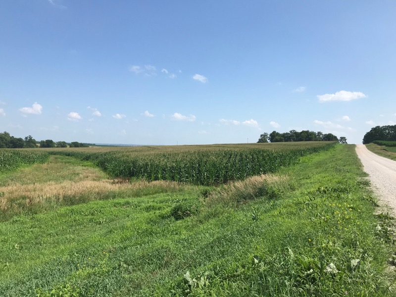 field corn in Nemaha county