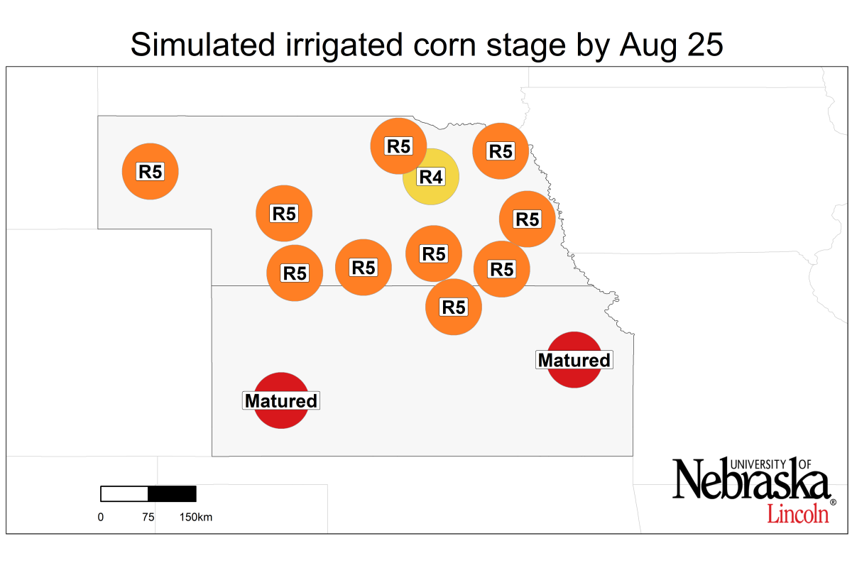 simulated irrigated corn stage by August 25