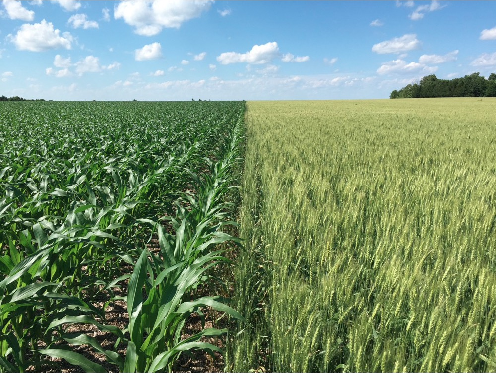 Crop diversity increased by adding winter wheat into the crop rotation
