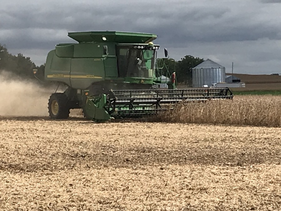 soybean being harvested