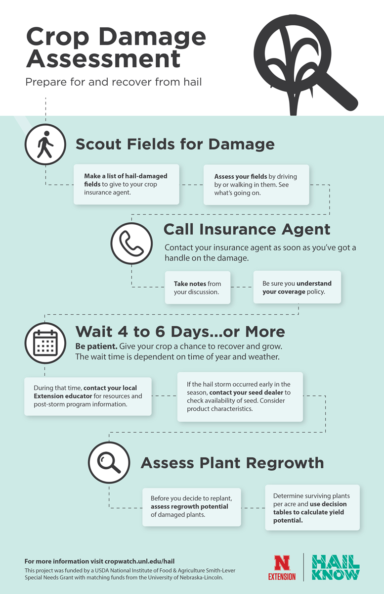 Infographic showing the process for damaging a hail-damaged crop