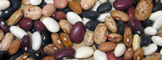 Close up of dry edible beans