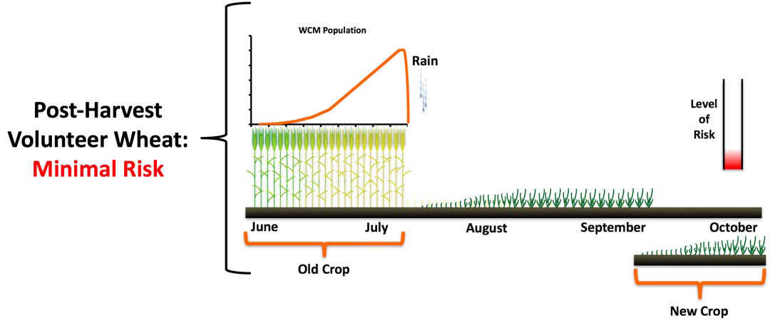 Figure showing risk of post harvest volunteer wheat control