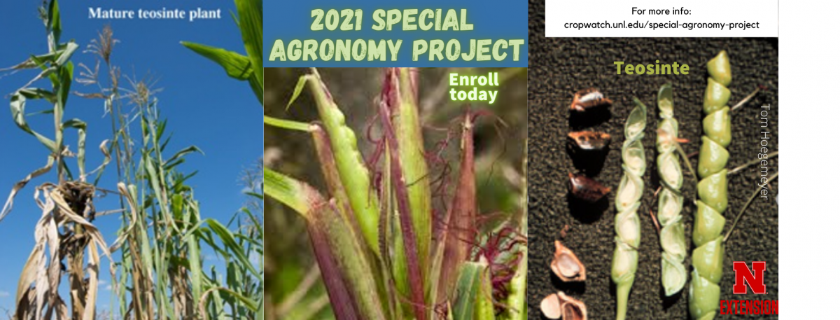 2021 Special Agronomy Projects