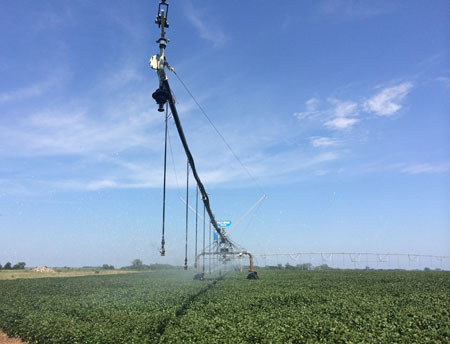 Soybeans under irrigation