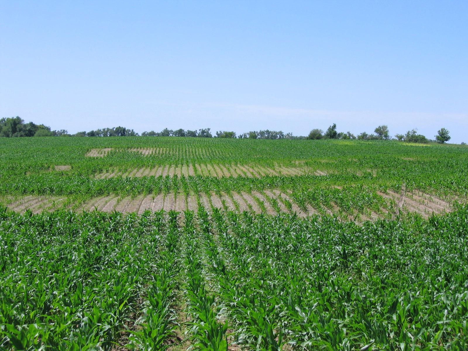 5 Diferentes tipos de suelos - Conozca su tipo de suelo | EL CRECIMIENTO DE LA NATURALEZA