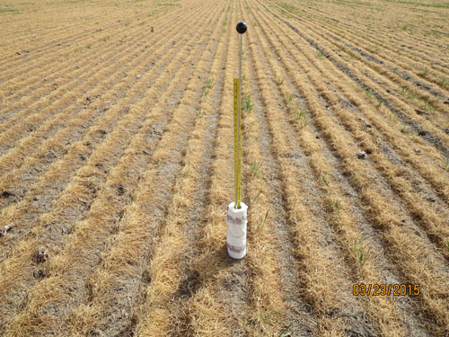 Soil moisture probe in dead winter wheat