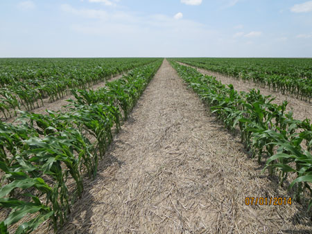 July 1 recovering corn