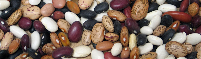 Mixed dry edible beans