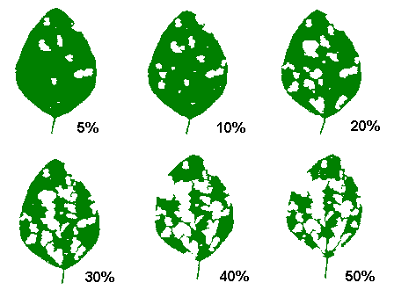 soybean defoliation guide