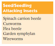 Seed and seedling attacking insects