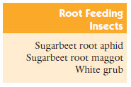 Root feeding insects