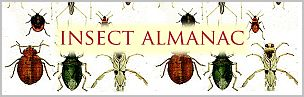insect almanac graphic