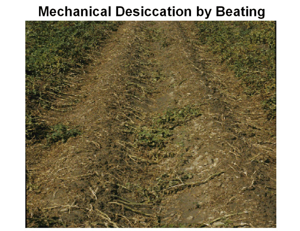 Mechanical desiccation by beating