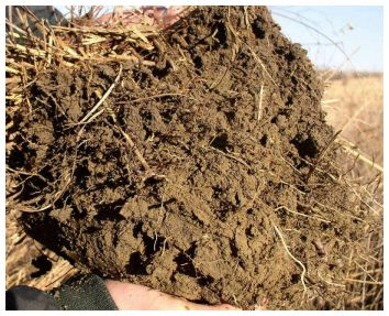 photo of soil sample