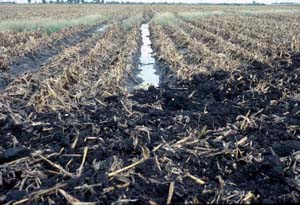 Photo of wet soil