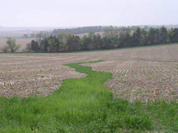 Photo of a harvested gully