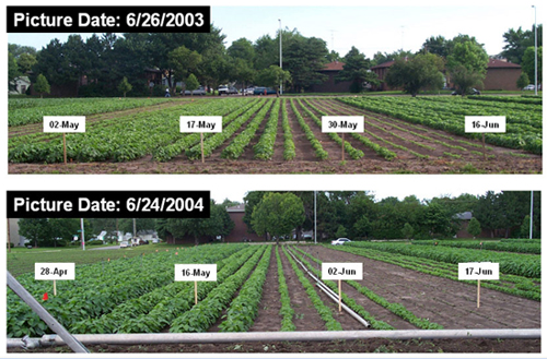 Photos showing plant response to four plant dates in 2003 and 2004.
