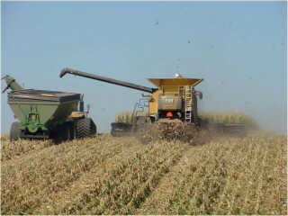 Combine harvesting corn and spreading the residue