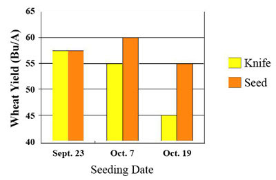 wheat seeding date effects