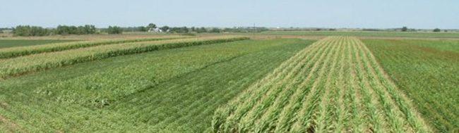 Crop water use trial conducted near Lawrence