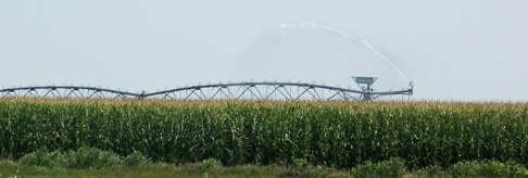 irrigating corn with center pivot