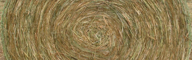 Switchgrass Round Bale Photo by F. John Hay
