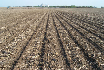 Strip-till soybean field in corn residue