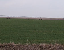 Early April winter wheat in Thayer County, Nebraska,