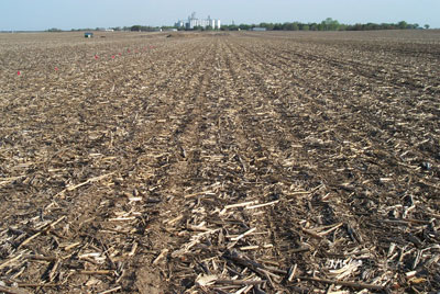 No-till soybean field in corn residue