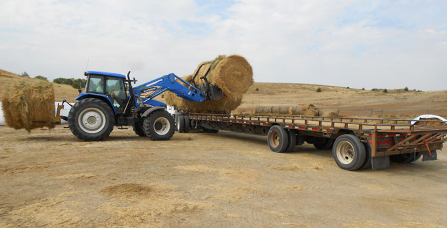 Hay being loaded on a truck bed