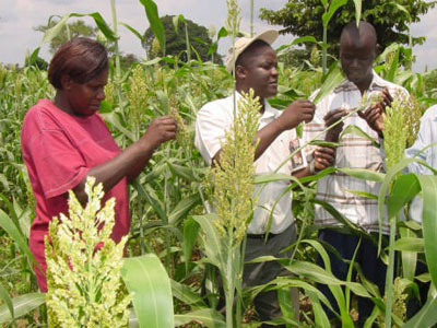 Crop fertility researchers in Uganda