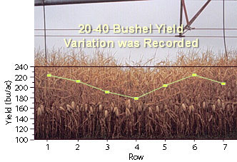 Graph showing yield variability due to irrigation problems
