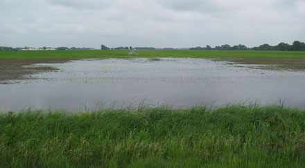Photo - Flooded field