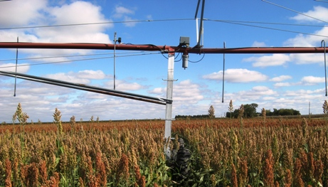 Pivot Irrigated Sorghum