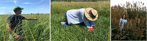 Agronomic experiential learning fellow field research