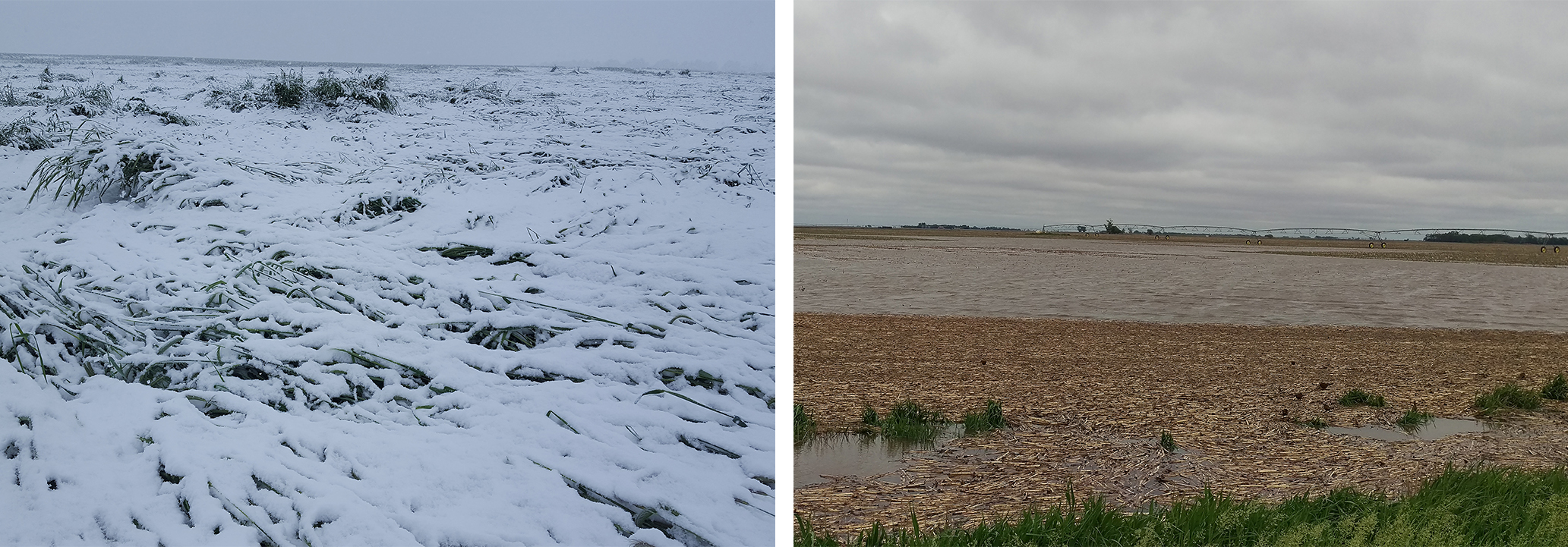 Snow-covered and flooded fields
