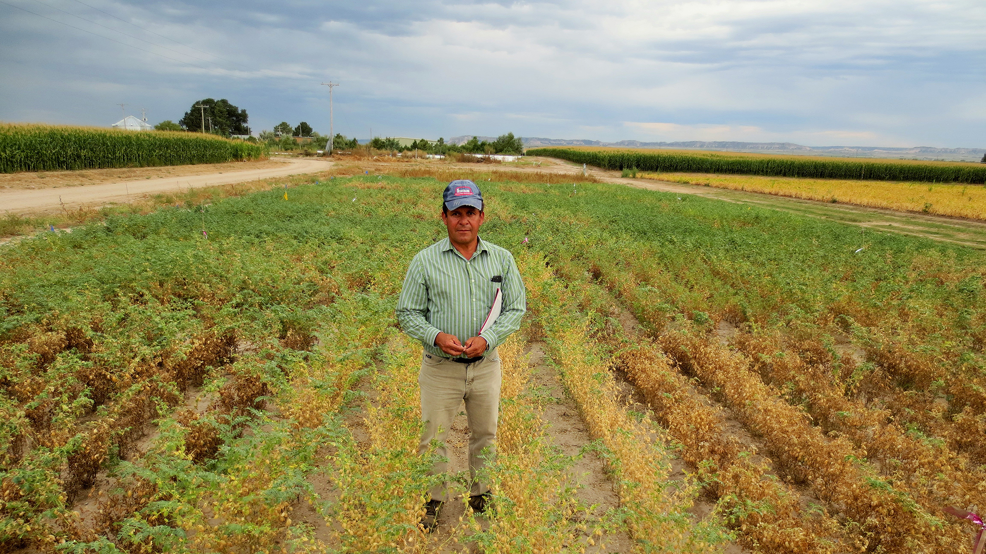 Carlos Urrea in a field of New Hope chickpeas