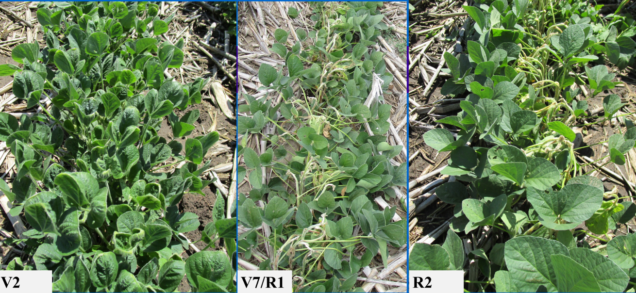 Results of RUP-dicamba research on non-tolerant plants