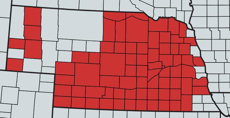 Corn Disease Update | CropWatch | University of Nebraska–Lincoln