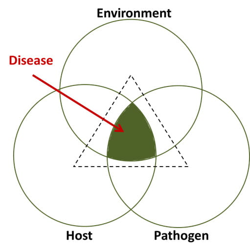 Plant Disease: Pathogens and Cycles | CropWatch