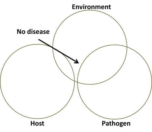 Variables within each component of the disease triangle may affect the presence of disease. This diagram represents a system in which the host is displaying resistance to disease even in intimate association with the pathogen under favorable environmental conditions.