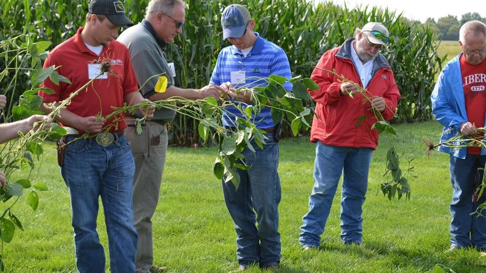 Producers analyze soybean plants at the 2015 late-season crop management diagnostic clinic. (Photo by Deloris Pittman)