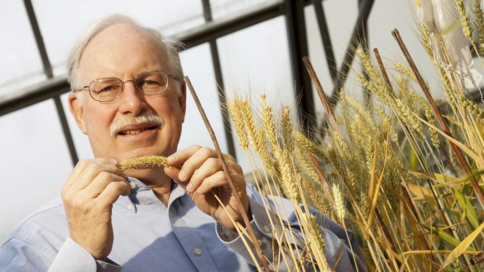 Stephen Baenziger, professor of agronomy and horticulture at the University of Nebraska-Lincoln will lead a three-year, $975,000 research project focused on the development of hybrid wheat. (Craig Chandler/University Communication)