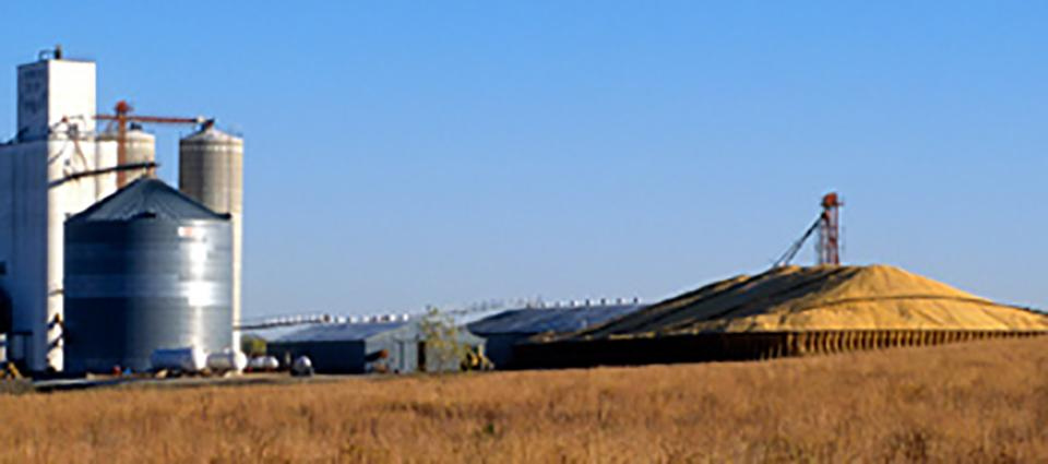 Figure 1. When traditional storage is limited, structures, bags, and piles may provide suitable alternatives if grain is carefully stored and monitored. Grain can be stored short-term in piles, but losses can quickly develop if it's not properly protected from the elements or stored too long.