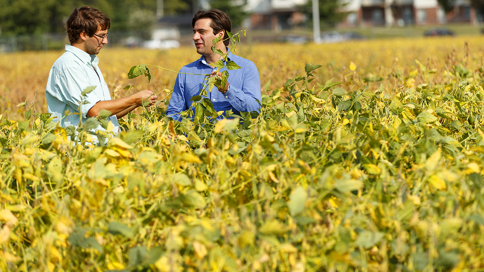 Researchers Nicolás Cafaro La Menza (left) and Patricio Grassini examining progress of soybean in the field.