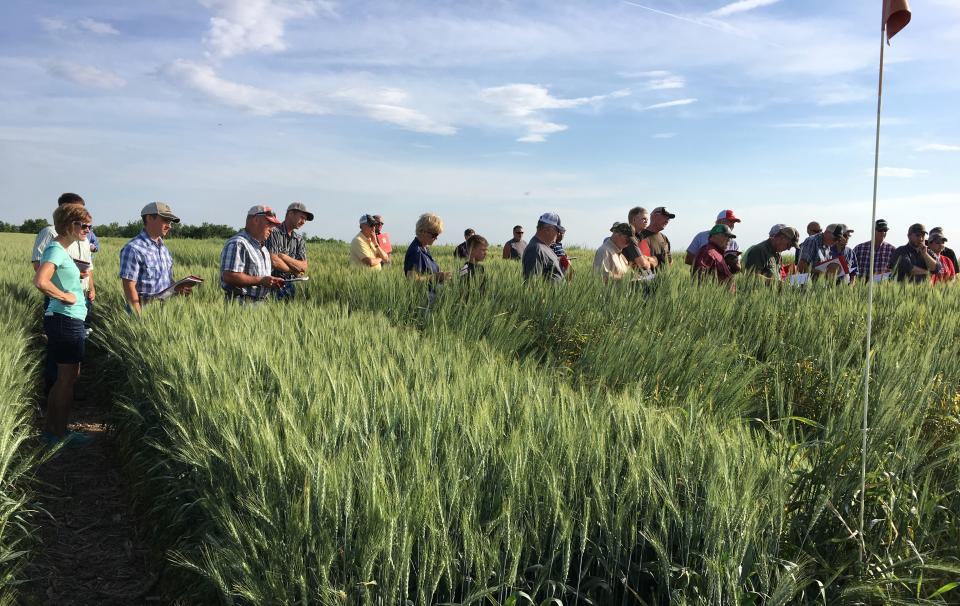 Wheat variety trial field day