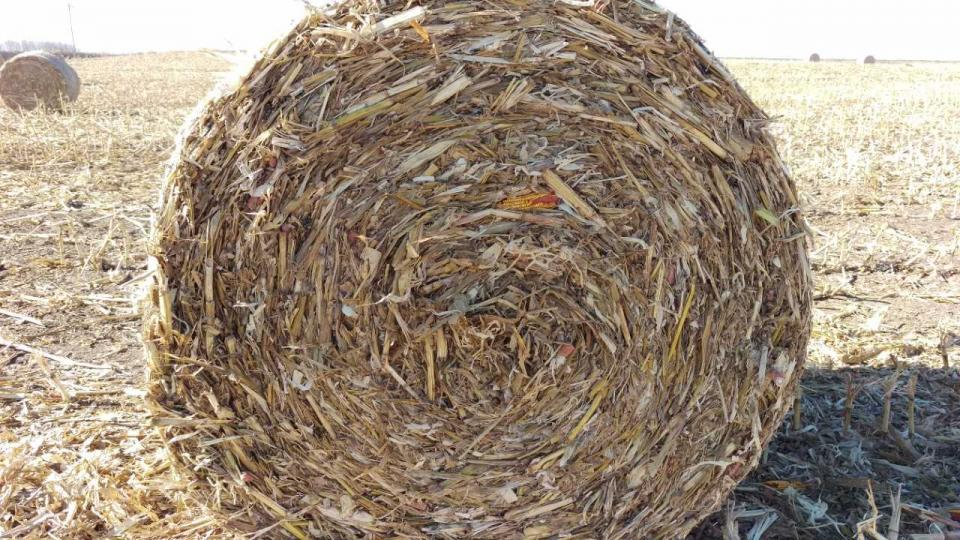 Figure 1. Corn stalk residue with downed ears, baled and ready to use. (Photo by Jenny Rees)