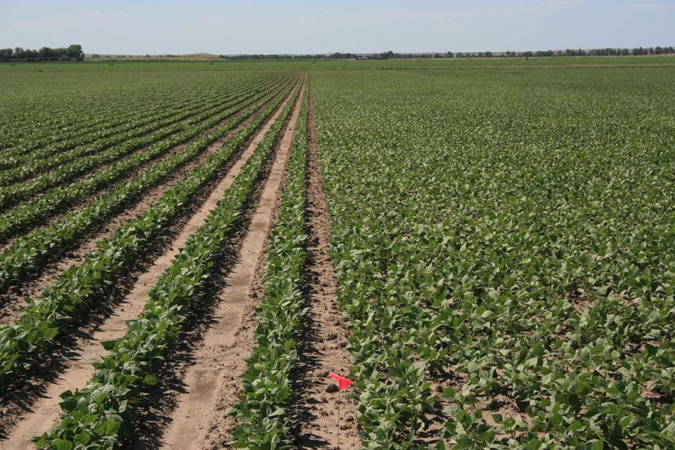 Field trial comparions of 7.5-inch and 30-inch row spacings